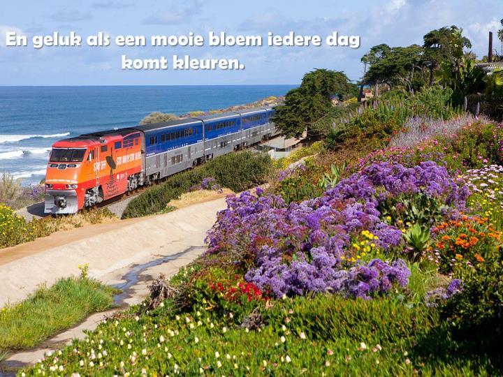 En geluk als een mooie bloem iedere dag                  komt kleuren.