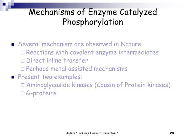 Mechanisms of Enzyme Catalyzed Phosphorylation