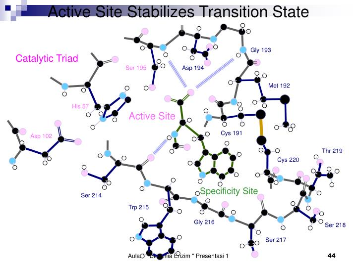 Active Site Stabilizes Transition State