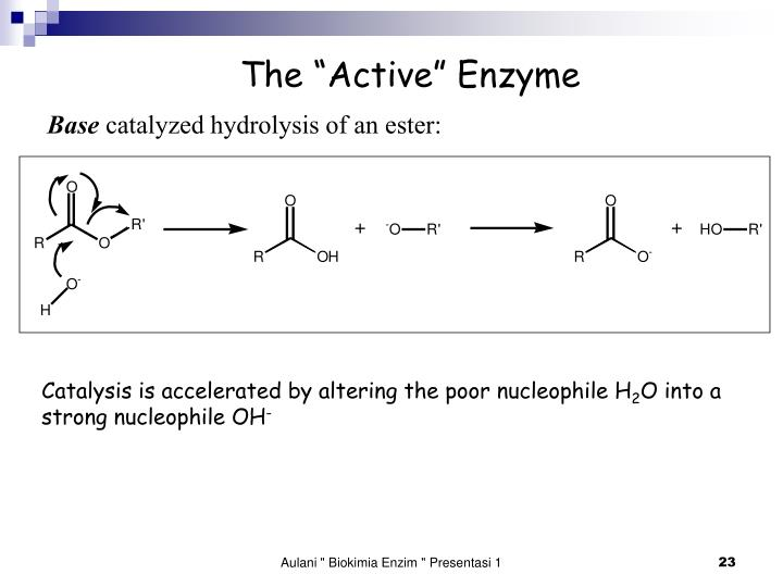 """The """"Active"""" Enzyme"""