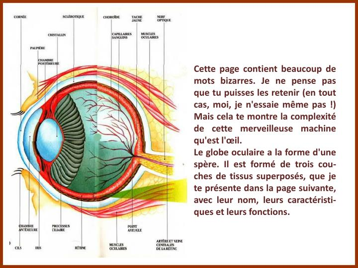 Cette page contient beaucoup de mots bizarres. Je ne pense pas que tu puisses les retenir (en tout cas, moi, je n'essaie même pas !) Mais cela te montre la complexité de cette merveilleuse machine qu'est l'œil.