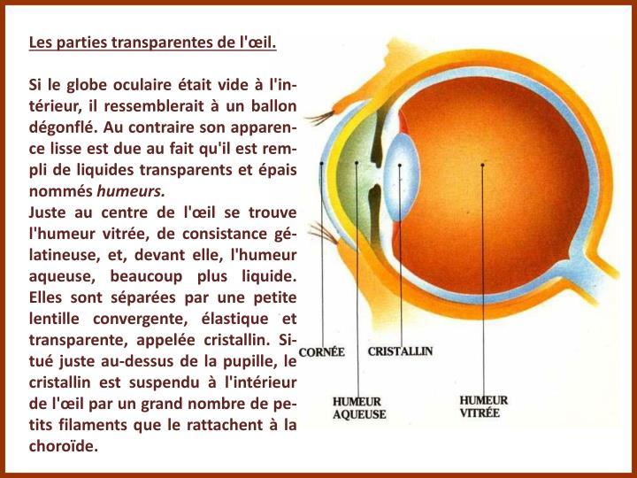 Les parties transparentes de l'œil.