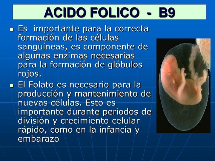 Acido folico b9