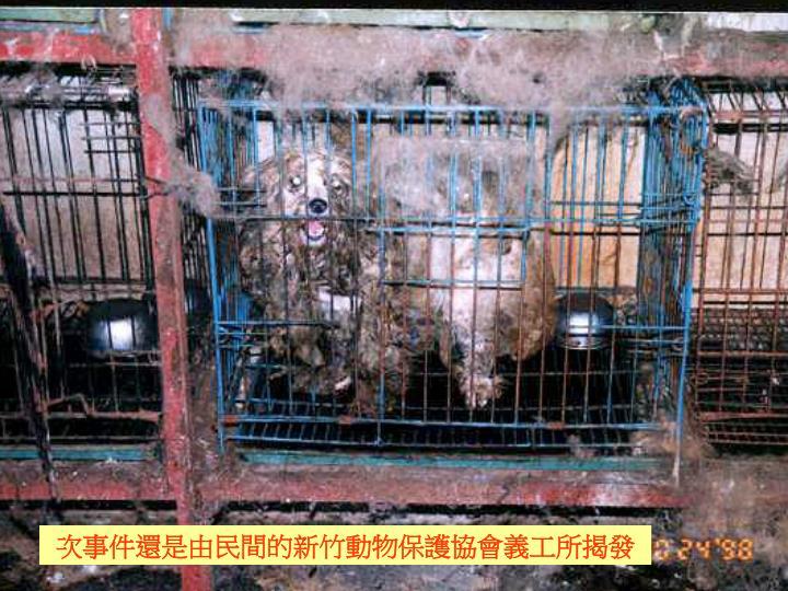 次事件還是由民間的新竹動物保護協會義工所揭發