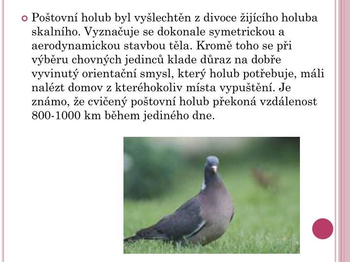 Poštovní holub byl vyšlechtěn z divoce žijícího holuba skalního. Vyznačuje se dokonale symetrickou a aerodynamickou stavbou těla. Kromě toho se při výběru chovných jedinců klade důraz na dobře vyvinutý orientační smysl, který holub potřebuje, máli nalézt domov z kteréhokoliv místa vypuštění. Je známo, že cvičený poštovní holub překoná vzdálenost 800-1000 km během jediného dne.