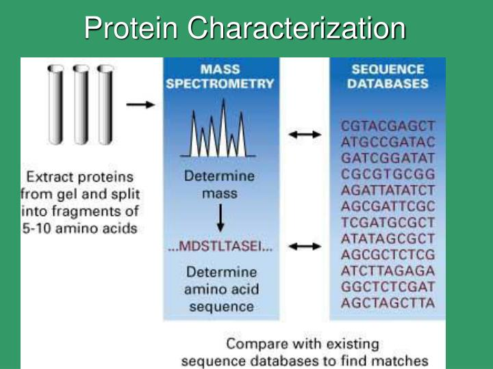 extraction and characterization of proteins Extraction and characterization of protein fractions  d protein extraction of date palm seed figure 3 presents results for the protein content and yield for the five procedures used to prepare date palm seed protein concentrates illustrating the difficulty in removing protein from plant seeds.