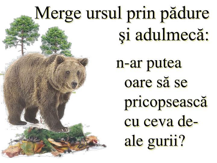 Merge ursul prin pădure şi