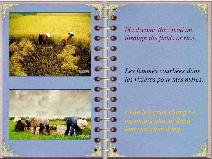 My dreams they lead me through the fields of rice,
