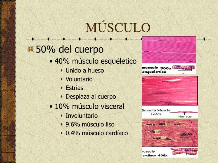 PPT - MUSCULO ESQUELÉTICO I PowerPoint Presentation - ID:4901451