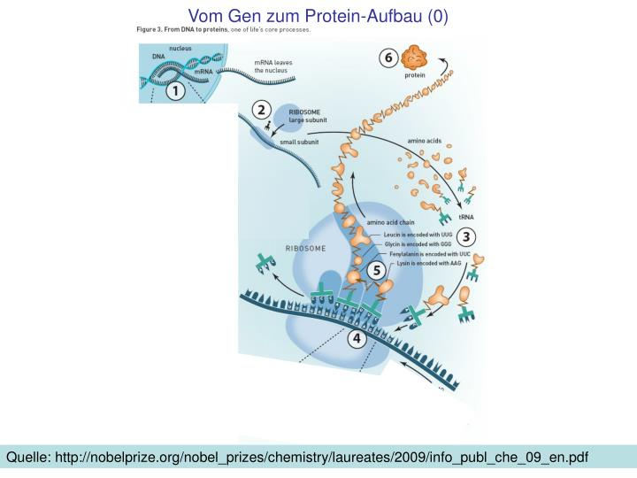 Vom gen zum protein aufbau 0