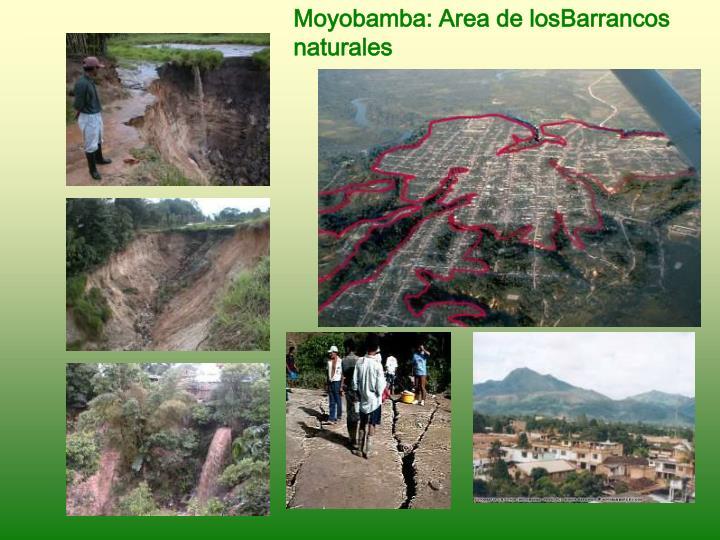 Moyobamba: Area de losBarrancos