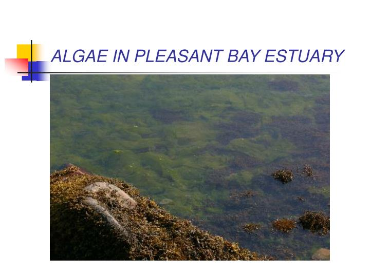 ALGAE IN PLEASANT BAY ESTUARY