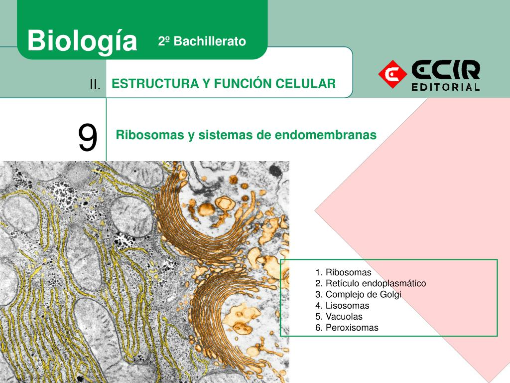 Ppt Estructura Y Función Celular Powerpoint Presentation
