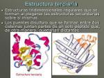 estructura terciaria
