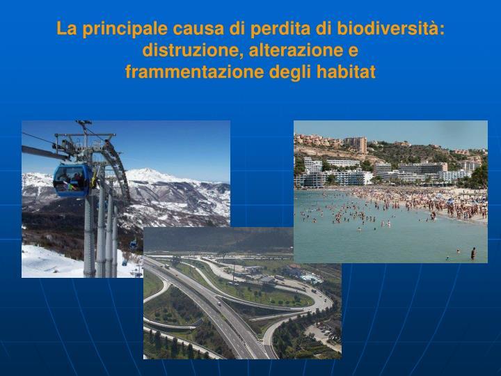 La principale causa di perdita di biodiversità: