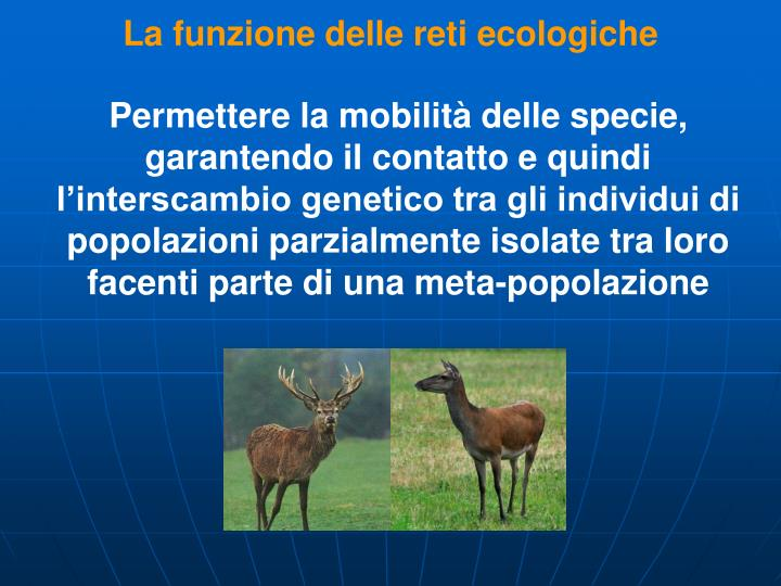 La funzione delle reti ecologiche