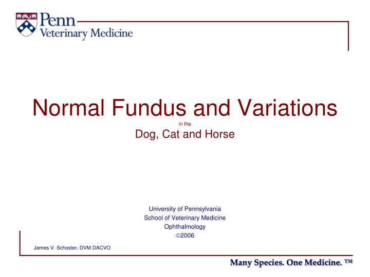 normal fundus and variations in the dog cat and horse n.