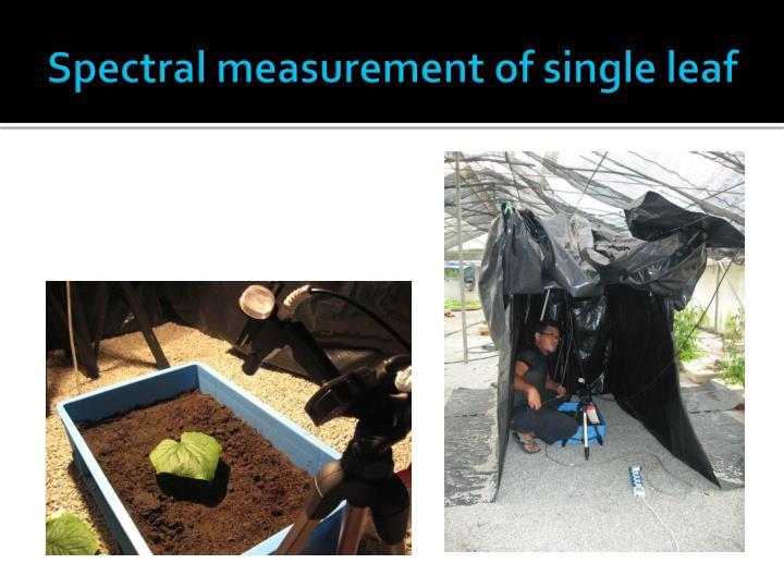 Spectral measurement of single leaf