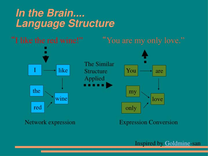 In the brain language structure