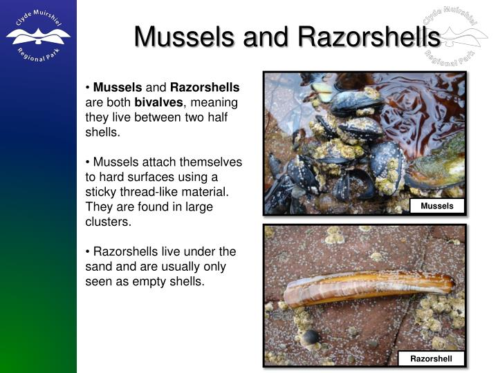 Mussels and Razorshells
