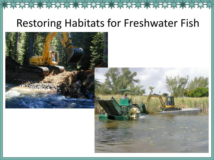 Restoring Habitats for Freshwater Fish