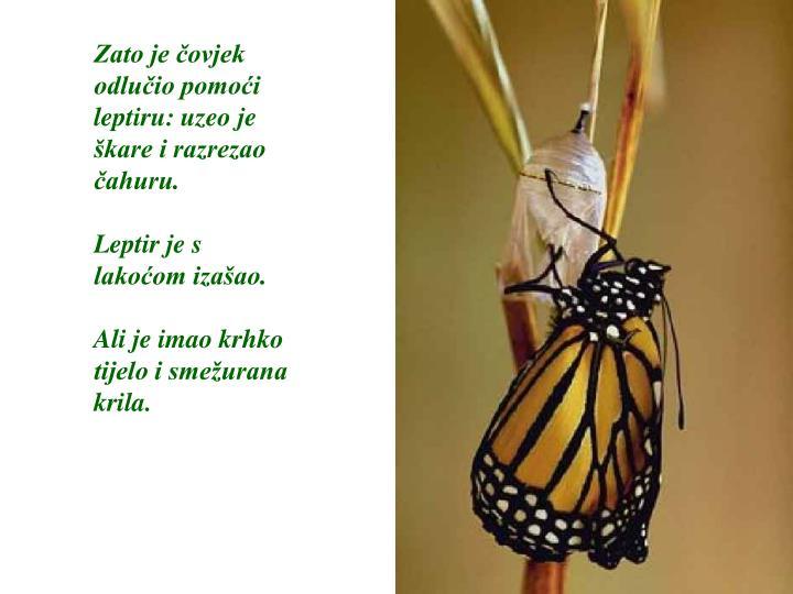 Zato je čovjek odlučio pomoći leptiru: uzeo je škare i razrezao čahuru.