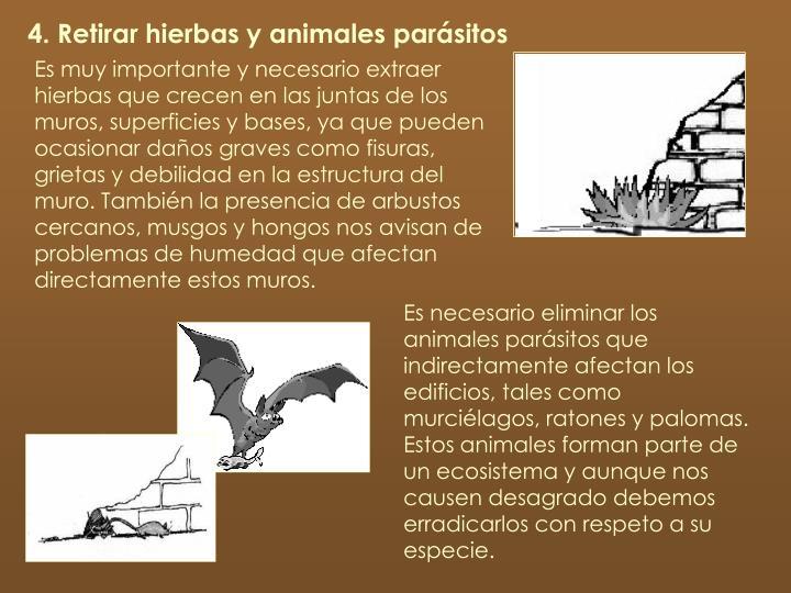4. Retirar hierbas y animales parásitos
