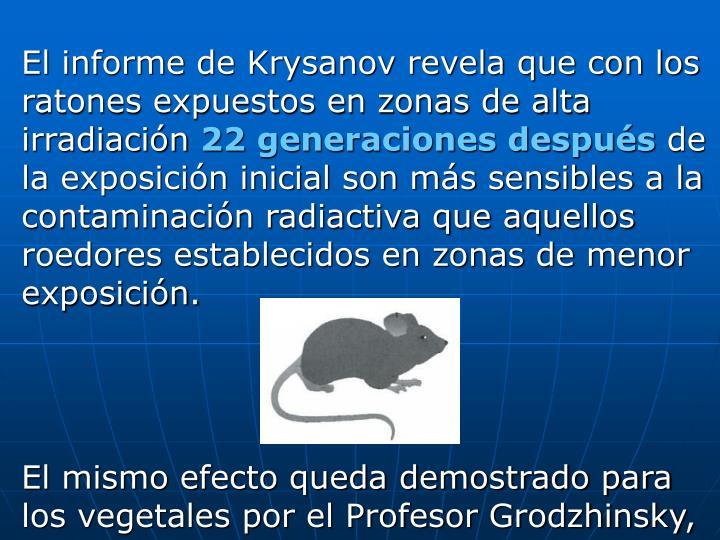 El informe de Krysanov revela que con los ratones expuestos en zonas de alta irradiación