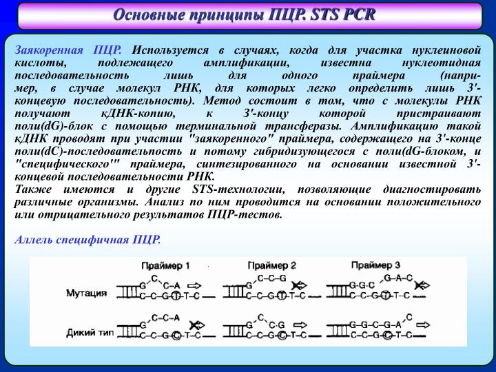 Основные принципы ПЦР.