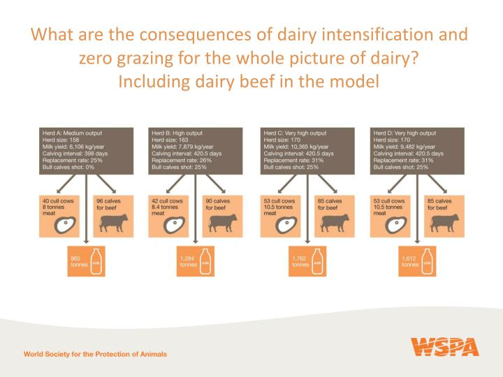 What are the consequences of dairy intensification and zero grazing for the whole picture of dairy?