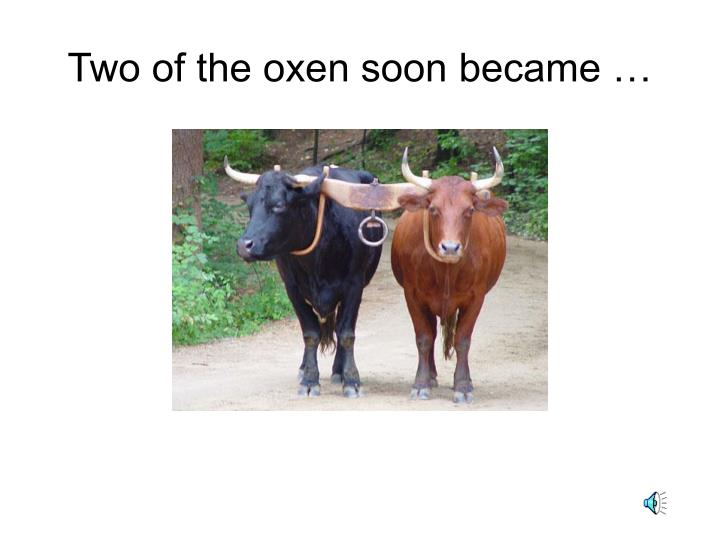 Two of the oxen soon became …