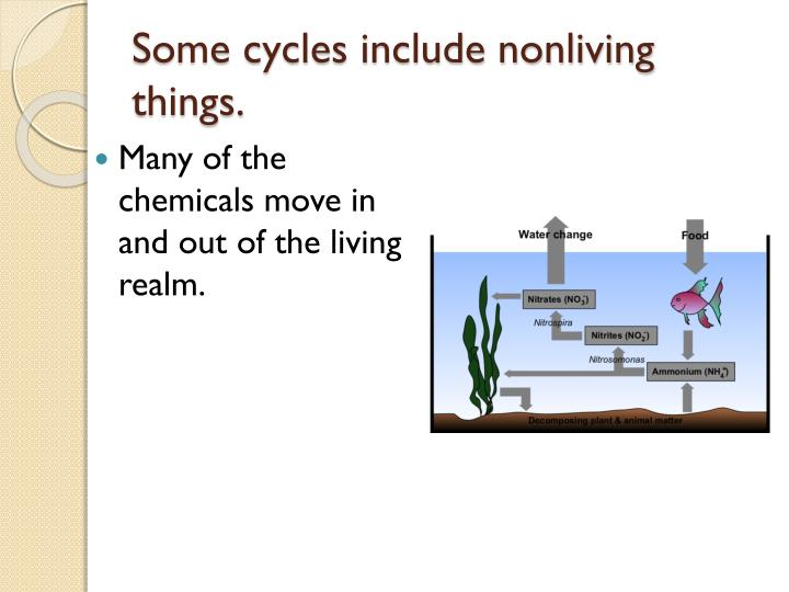 Some cycles include nonliving things.