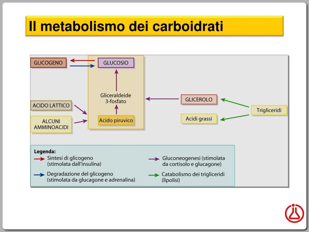 PPT - Definizione di metabolismo PowerPoint Presentation..