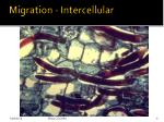 migration intercellular