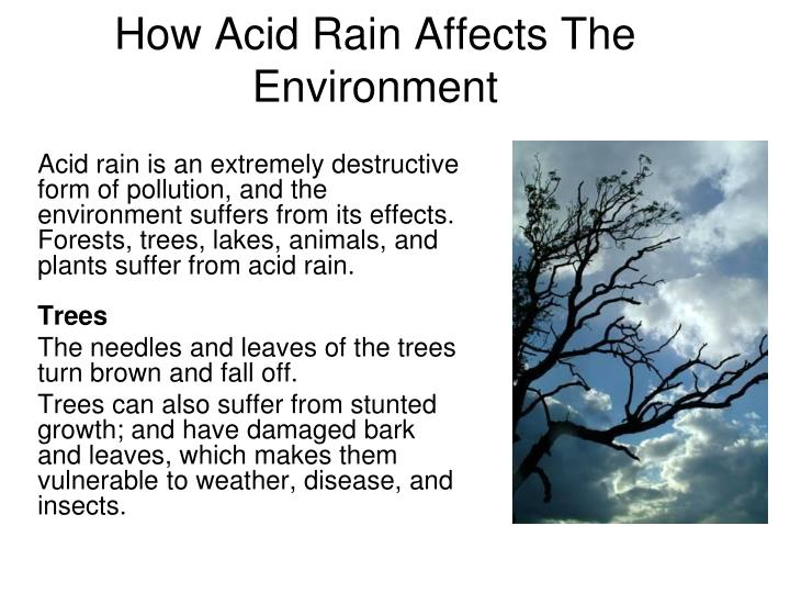 a look at the causes and effects of acid rain Discover the causes and effects of acid rain, the impact acid rain has on wildlife and what you can do to help prevent it acid rain has many damaging effects on soil and plants, sometimes the causes and effects of acid rain written by: matt schelke•edited by: niki fears•updated: 10/23/2009.