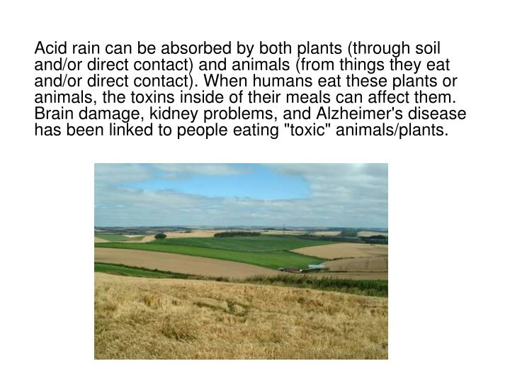 """Acid rain can be absorbed by both plants (through soil and/or direct contact) and animals (from things they eat and/or direct contact). When humans eat these plants or animals, the toxins inside of their meals can affect them. Brain damage, kidney problems, and Alzheimer's disease has been linked to people eating """"toxic"""" animals/plants."""