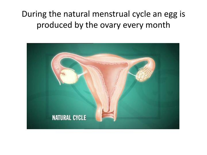 During the natural menstrual cycle an egg is produced by the ovary every month