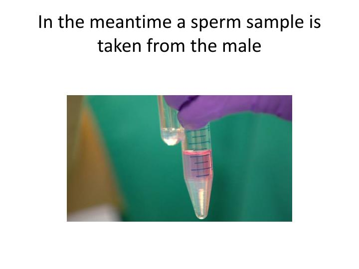 In the meantime a sperm sample is taken from the male