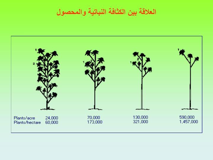 العلاقة بين الكثافة النباتية والمحصول