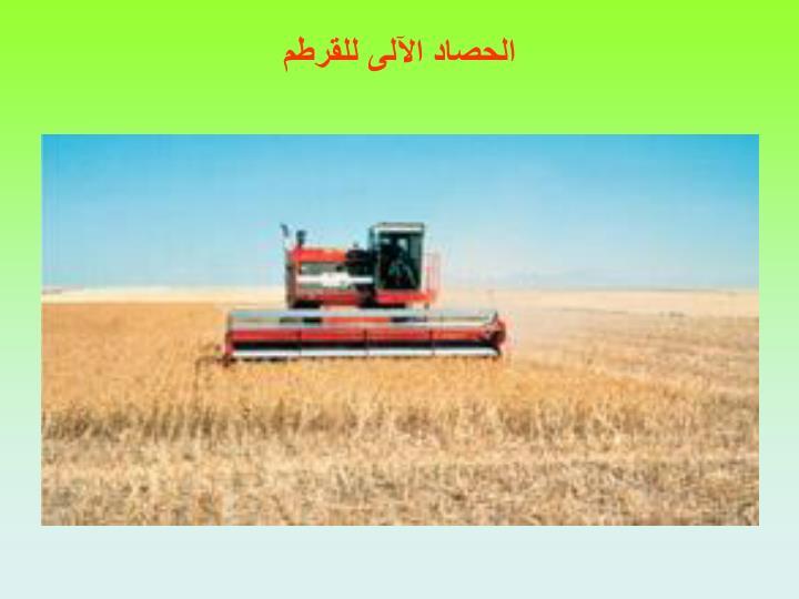 الحصاد الآلى للقرطم