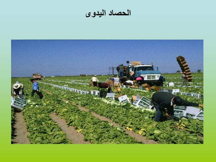 الحصاد اليدوى