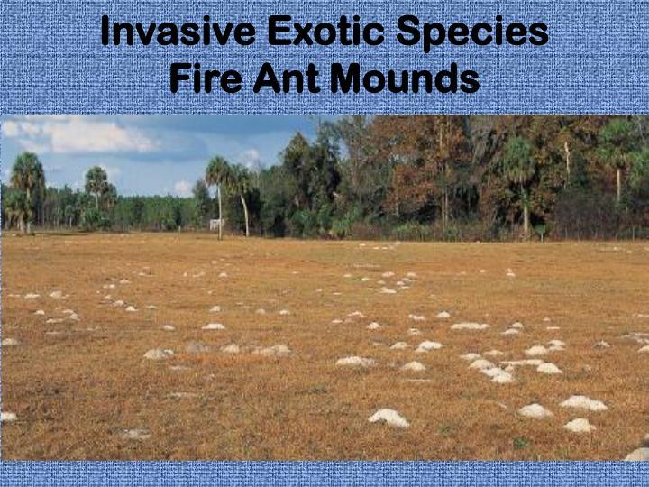 Invasive Exotic Species