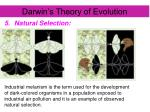 darwin s theory of evolution5