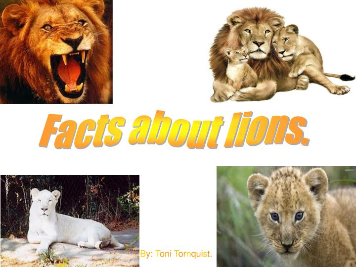 Facts about lions.