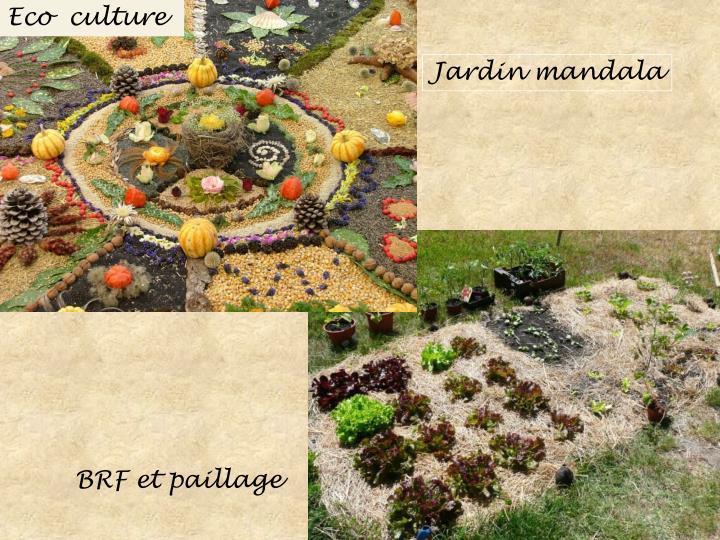 Eco  culture