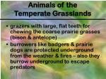 animals of the temperate grasslands