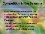 competition in the savanna