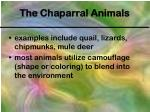 the chaparral animals
