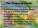 the chaparral plants