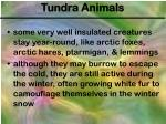 tundra animals1